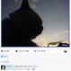<<★八月おすすめ★>> かご猫575