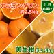 【2種類合計5kg×3か月(3月~5月)】愛媛かんきついろいろ味くらべ頒布会