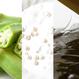 薔薇精華油Rose Oil & 修復乳Recovery Gel Cream 60g