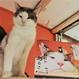 【NPO法人ツキネコ北海道】オリジナル卓上&壁掛けカレンダー2017  セット
