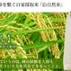まとめ買いの方(玄米)【ネット販売は当店限定!】幻の米。究極のお米を求める方向け。茨城県産・化学肥料不使用オリジナル銘柄米 やまさん 10kg