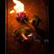 BURNING ROSE TEE  (BLACK)