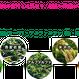 VEGE POWER PLUS(6包入りBOX)1スティック(2.25g)×6包