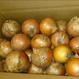 たまねぎ 〈十勝産〉10kg(有機栽培)送料無料