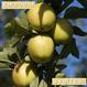【送料無料】「王林(おうりん)」3kg(約10玉)【青森県産りんご:家庭用】
