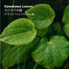 KAWAKAWA BALM (カワカワバーム) 30g