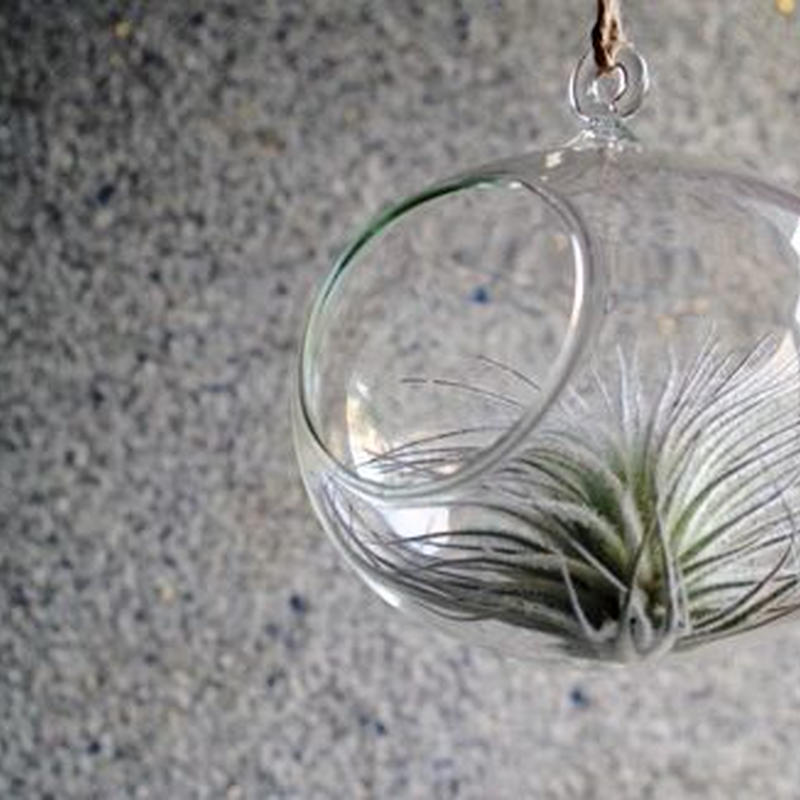 ガラスオーバル ×テクトラム