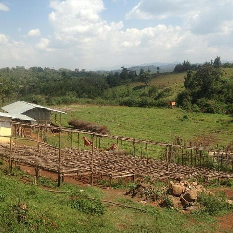 エチオピア タデ GG農園 200g