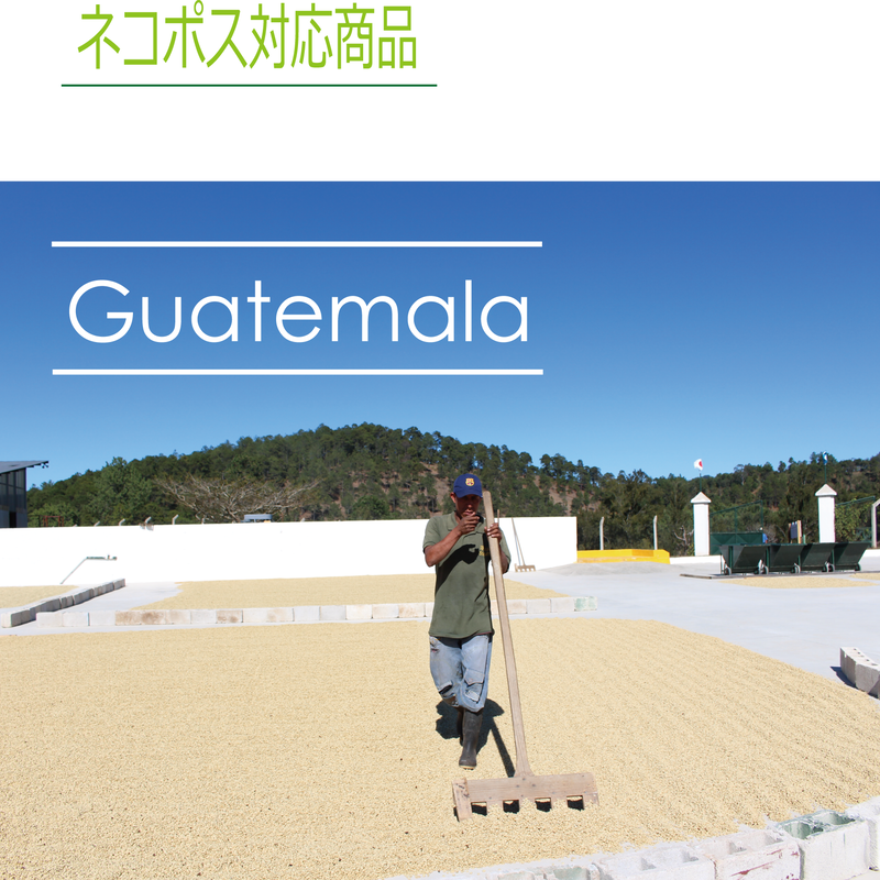 グァテマラ ラ・メルセー 100g