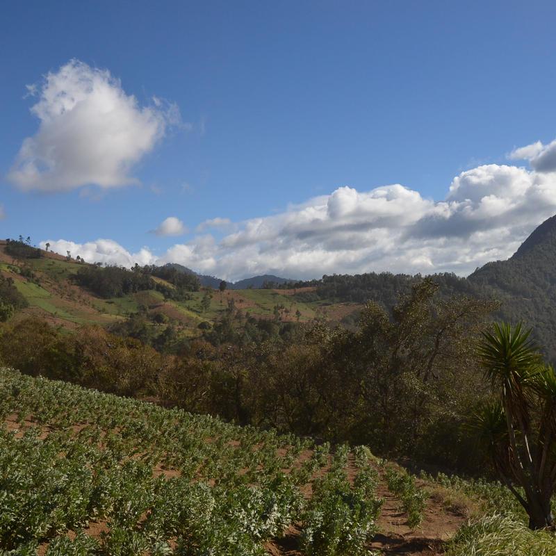 グァテマラ ラ・トラベシア農園 シティロースト 200g