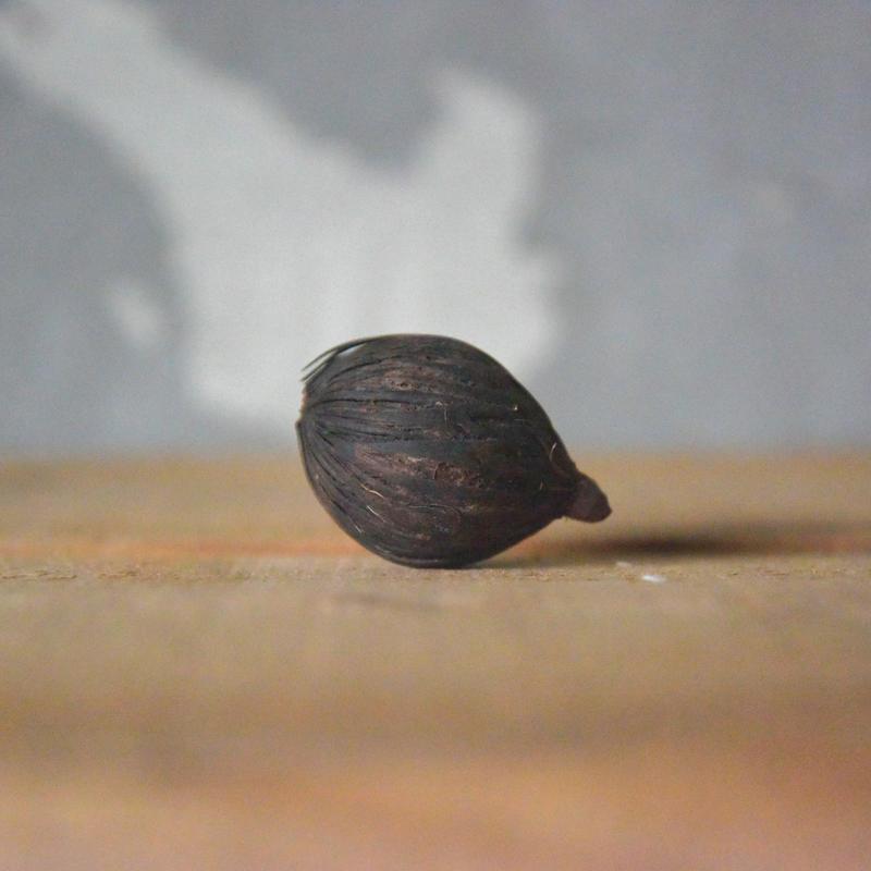 フォックステイルナッツ
