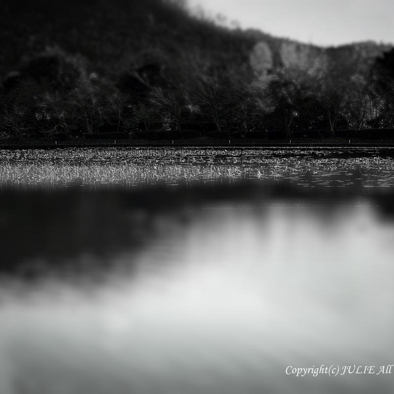 JULIE's Photo Monochrome-284