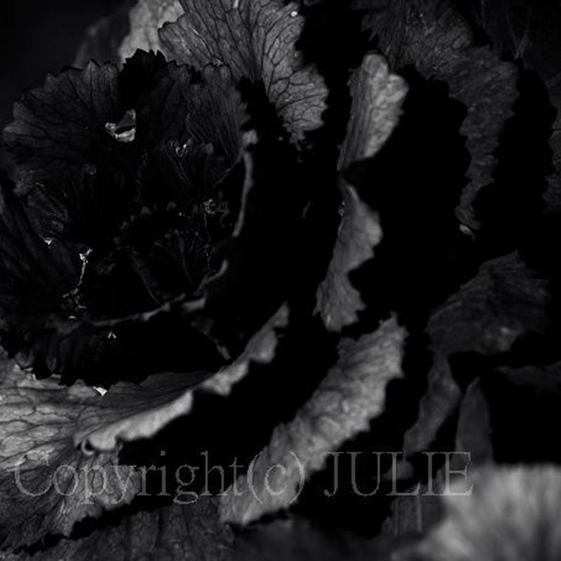 JULIE's Photo Monochrome-314  for web size