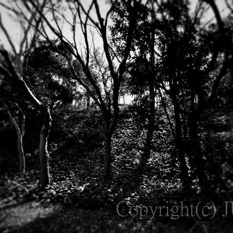 JULIE's Photo Monochrome-313