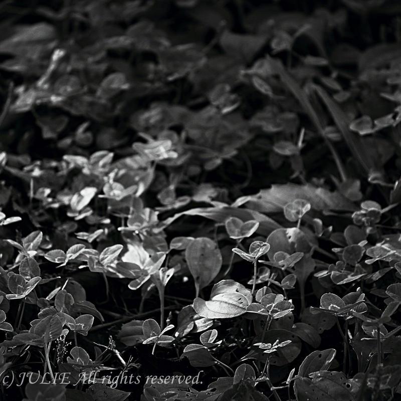 JULIE's Photo Monochrome-203