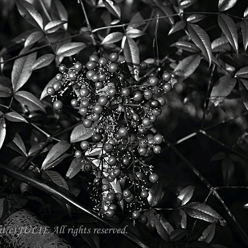 JULIE's Photo Monochrome-192