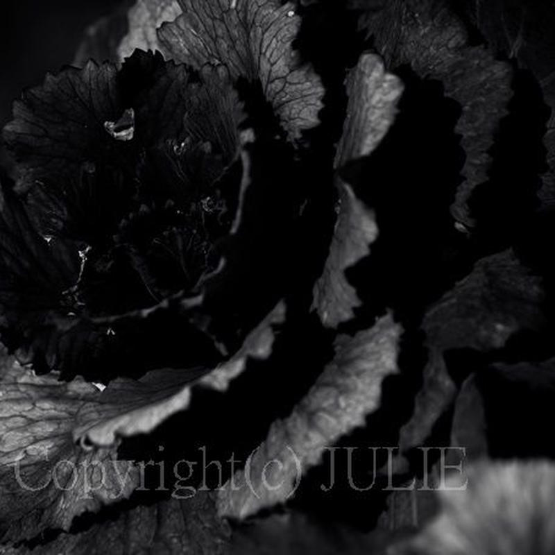 JULIE's Photo Monochrome-314