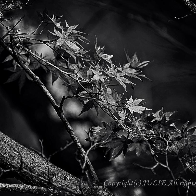JULIE's Photo Monochrome-191