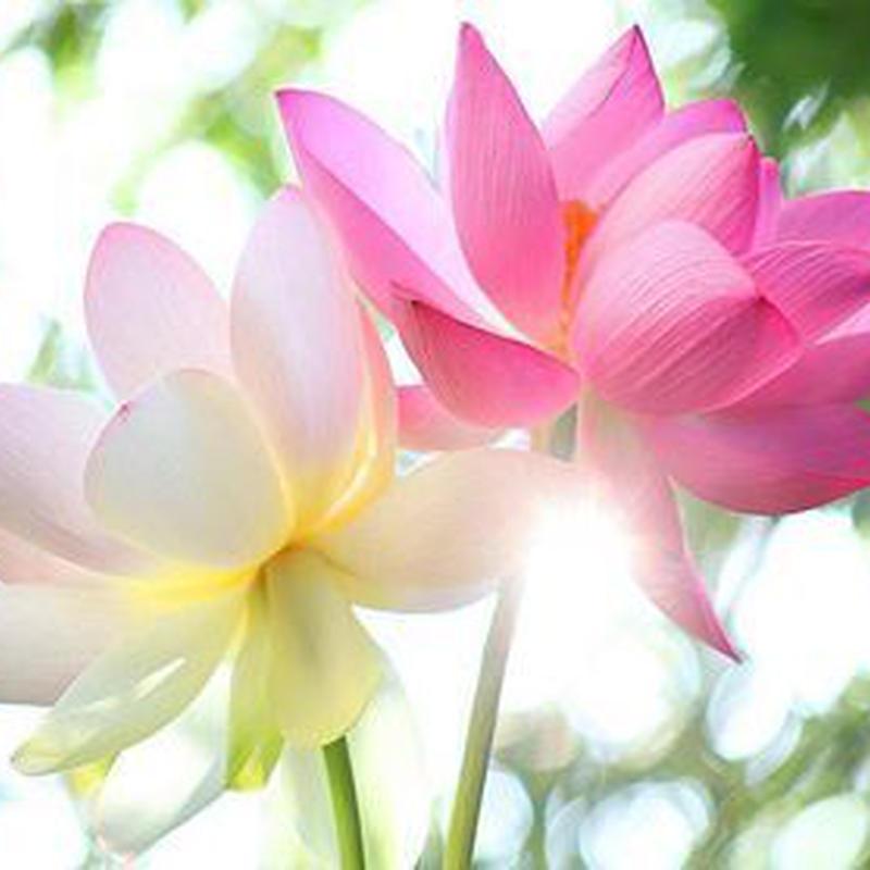 ◆聖観音ヒーリング~虹の蓮の光~