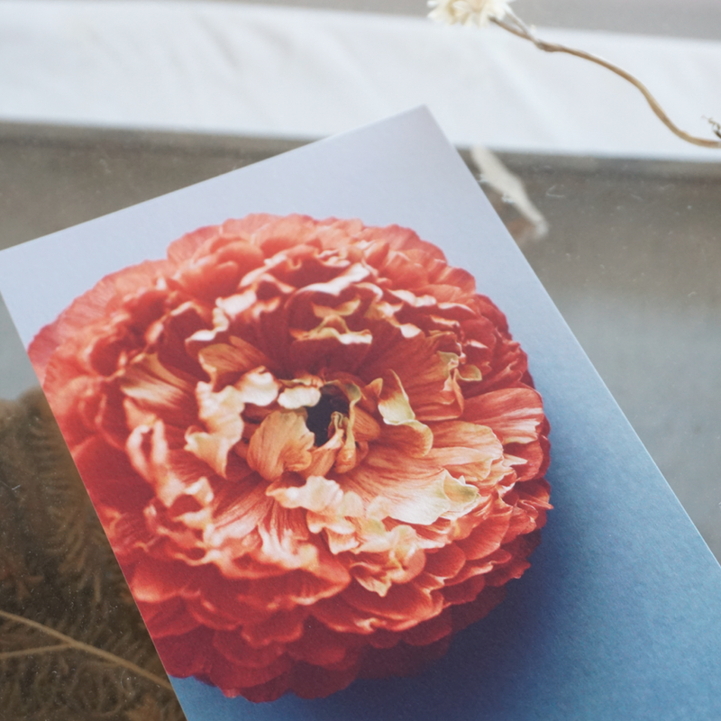 OF PLANTS // POST CARD - Ranunculus