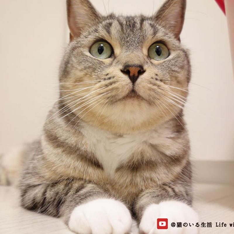 猫のいる生活チャンネル ポストカード3点セット 東急ハンズ池袋店販売記念品
