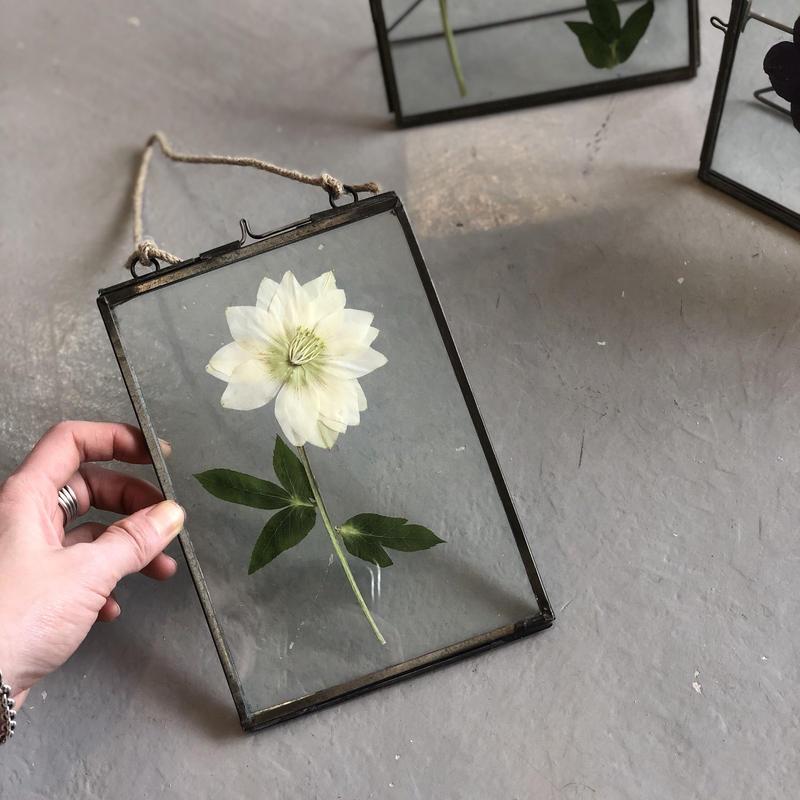 flower Photo flame =吊型L  X'mas ROSE =