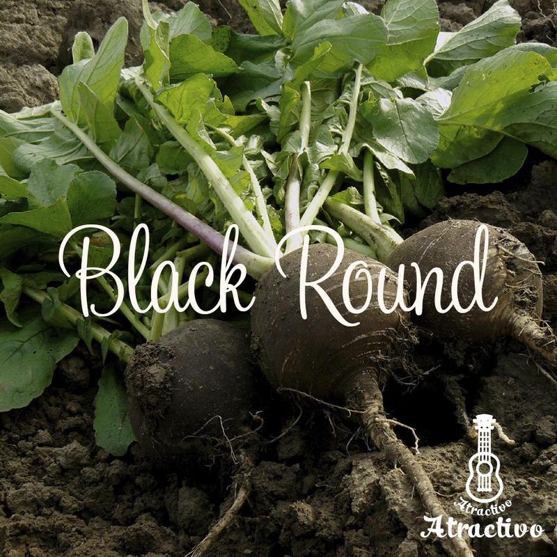 黒い大根ブラックスパニッシュラディッシュの種