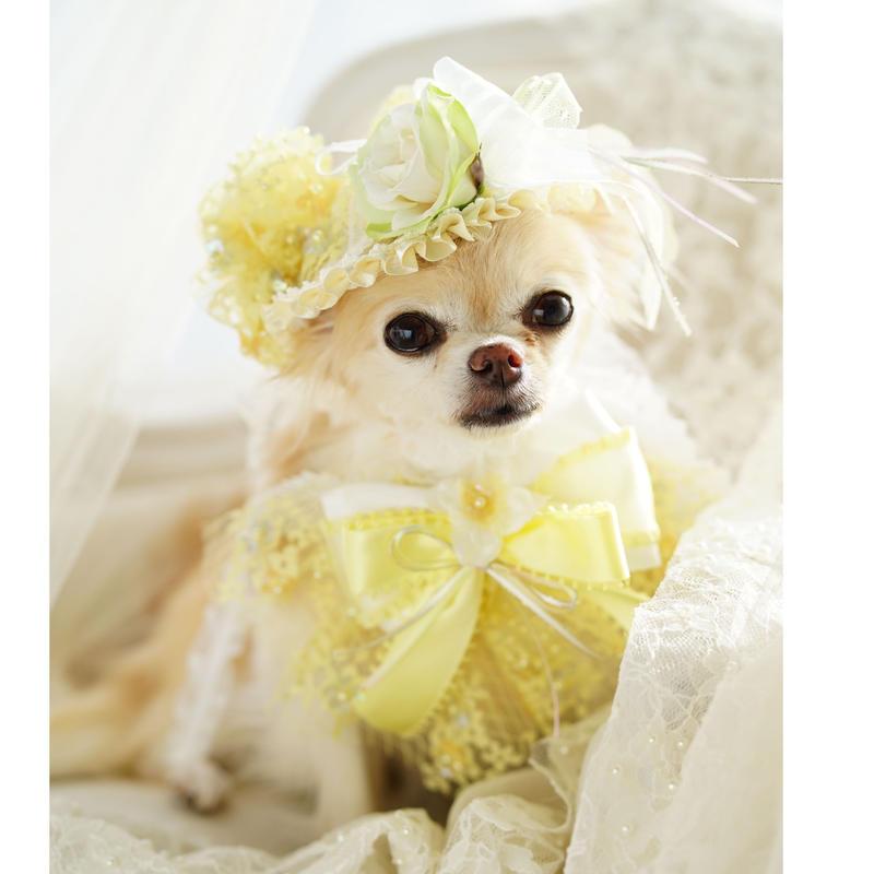 Love  parade hat yellow