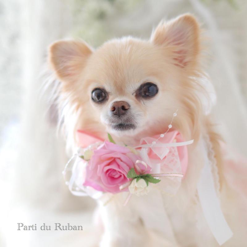ダイヤモンドローズの贈り物(Pink)