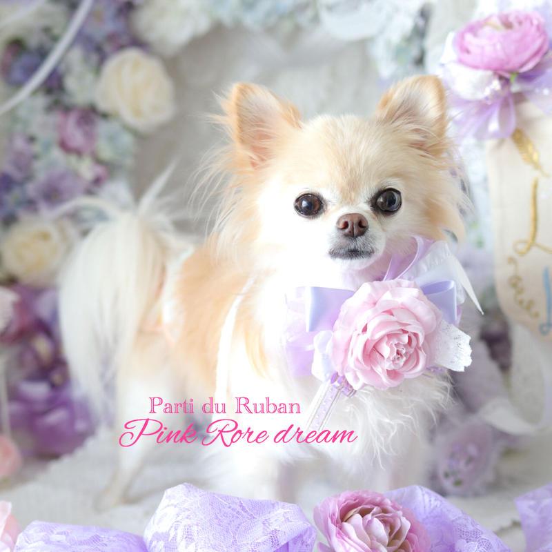 Pink Rose dream