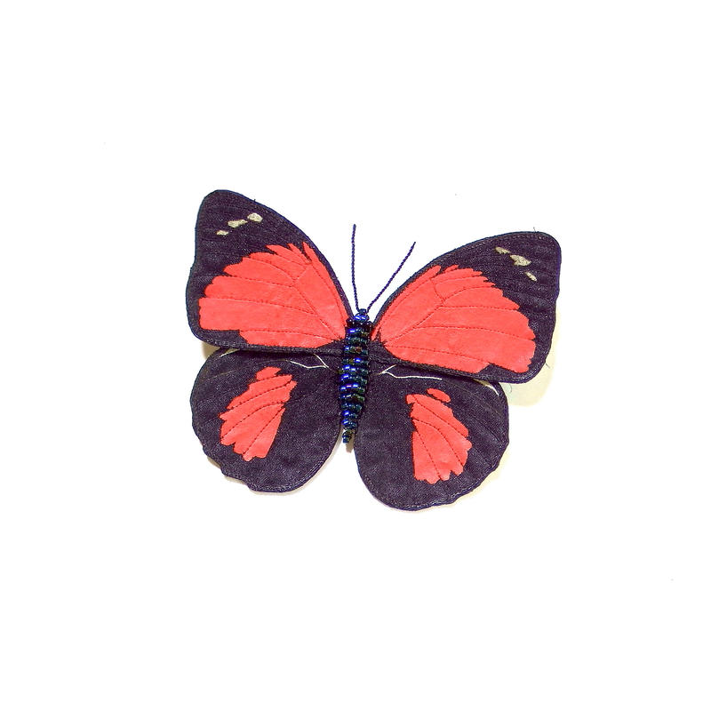 クラウディナミイロタテハ(クロエスス)♀