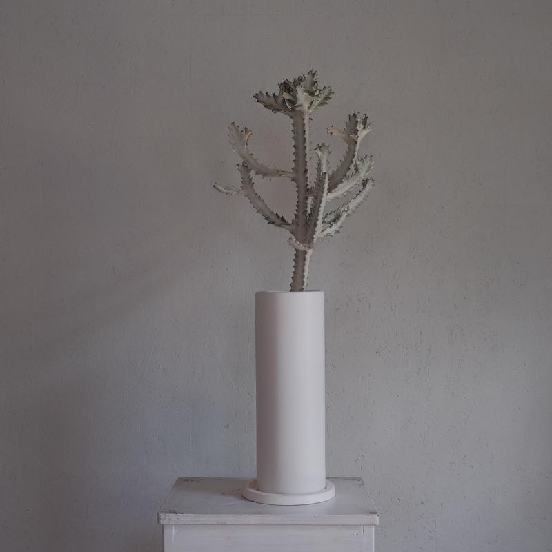 ユーフォルビア・ホワイトゴースト  Euphorbia lactea White Ghost