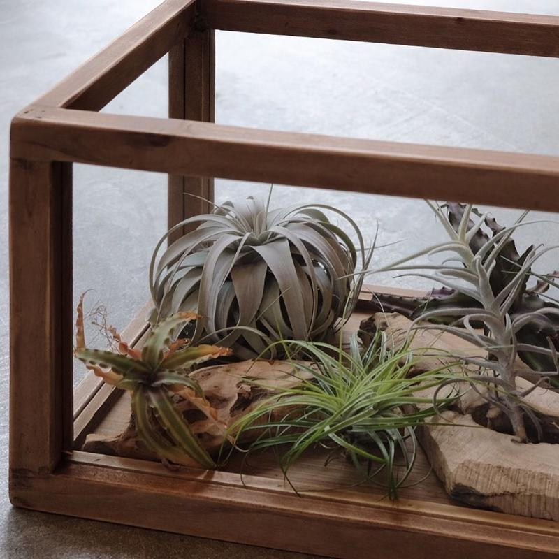 Plants Display Box