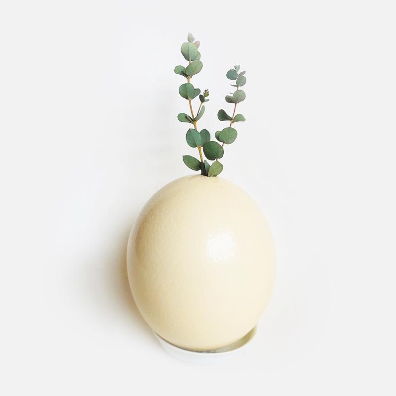 ダチョウの卵   [個物]  / 永井ミキジ