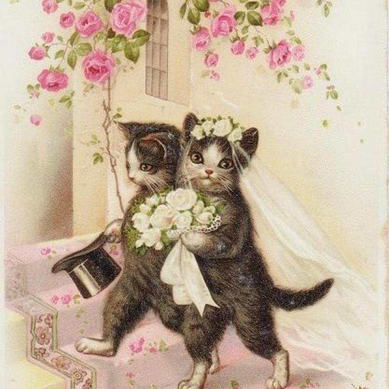 猫のマリアージュポストカード