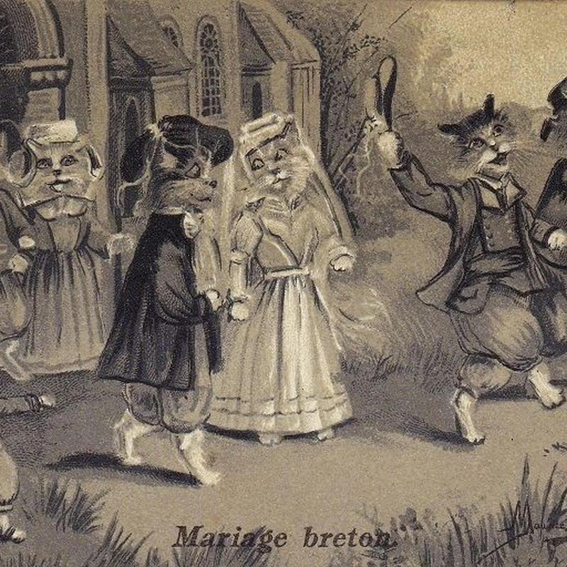 猫ちゃんのブルターニュの結婚式のポストカード