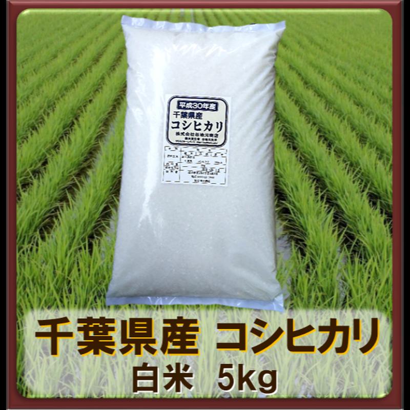 平成30年 千葉県産 コシヒカリ  白米 5㎏