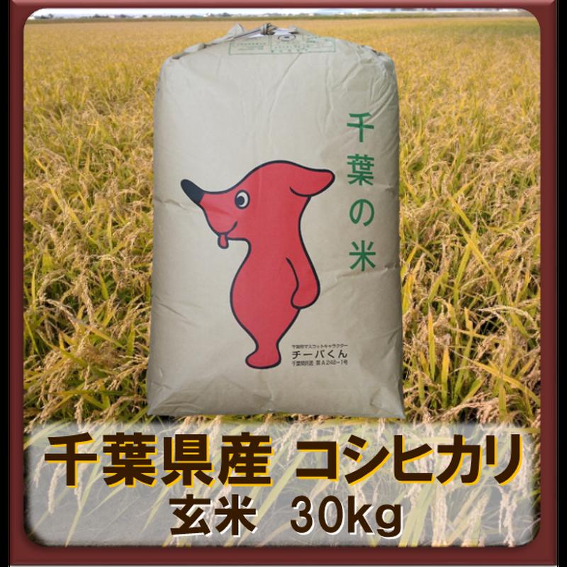 平成30年 千葉県産 コシヒカリ 一等米  玄米30kg