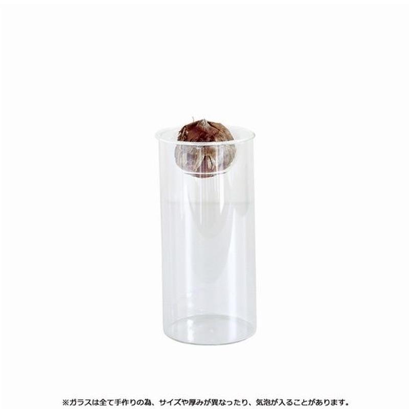 サボテンや多肉植物の水耕栽培に 大人気商品 BULB VASE LONG