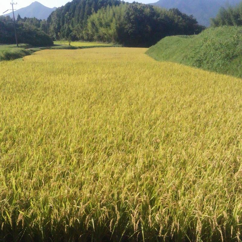 大分県産  イセヒカリ  玄米 30kg