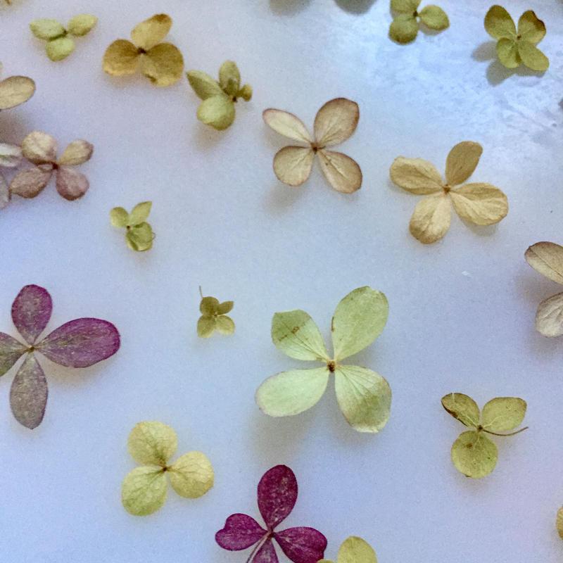 Dried flower's* / Autumn color assort  *D