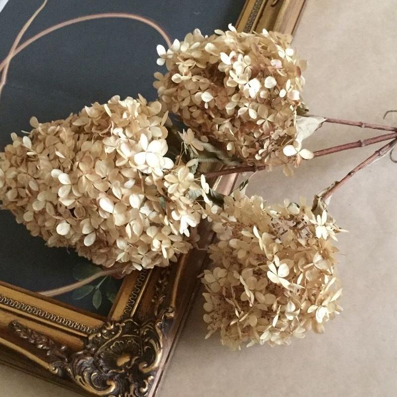 Dried flower's* ノリウツギ /  L*size assort