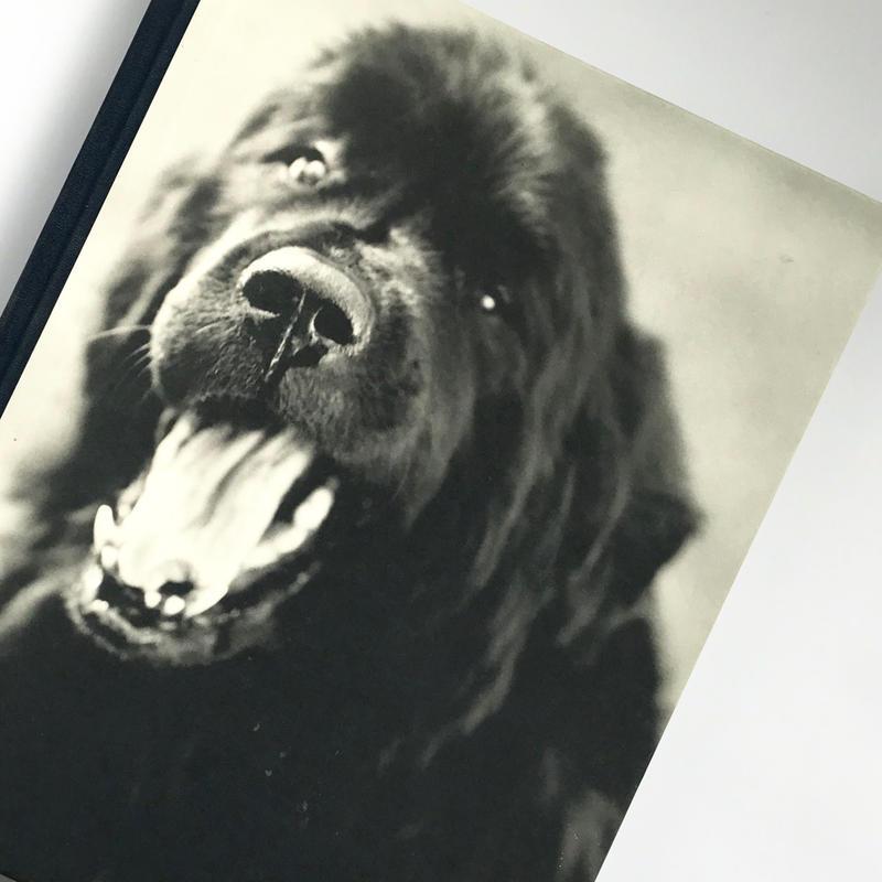 Title/Gentle Giants Author/ Bruce Weber