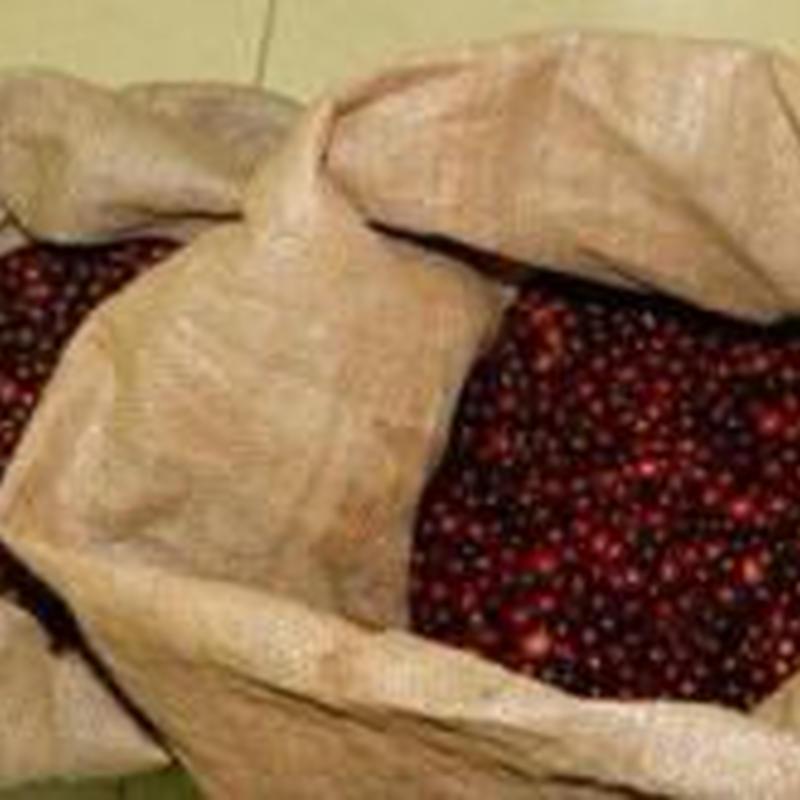 手摘み完熟豆 ブラジル セラード サンマヌエル農園 200g