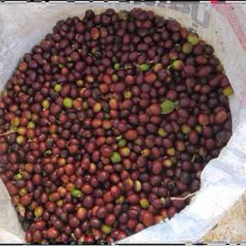 ラオス ~初入荷!ラオスのコーヒー豆500g入¥2300 ご注文後焙煎いたします