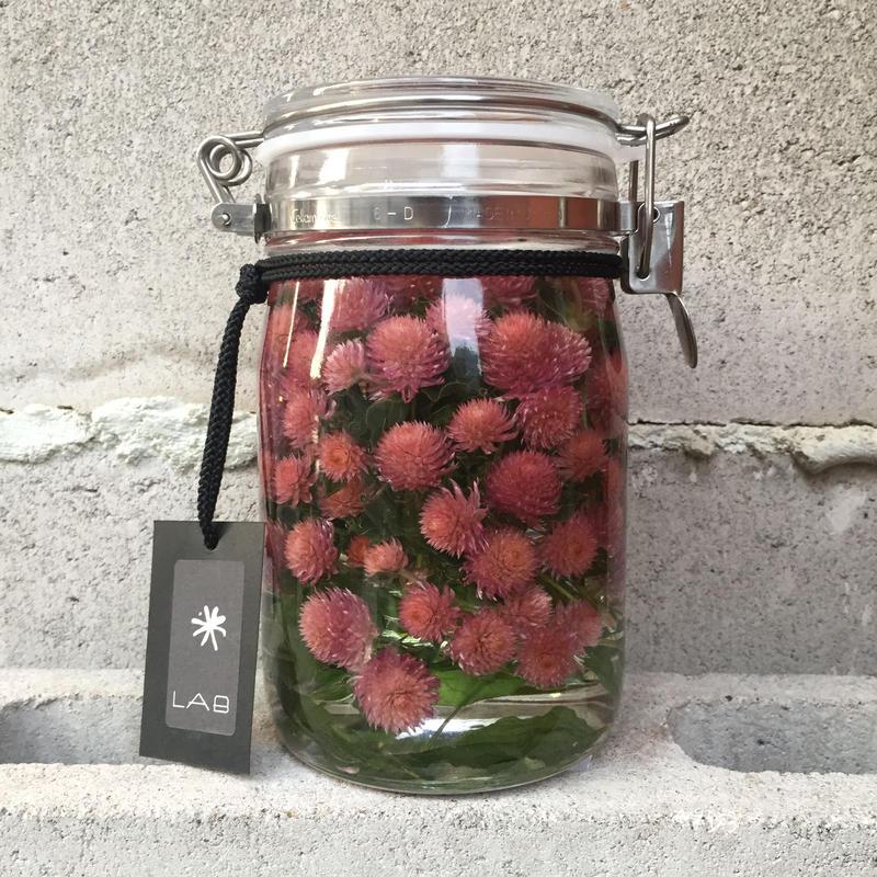 Lab bottle plants 1ℓ (globe amaranth)