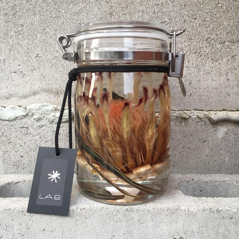 Lab bottle plants 1ℓ (protea niobe)
