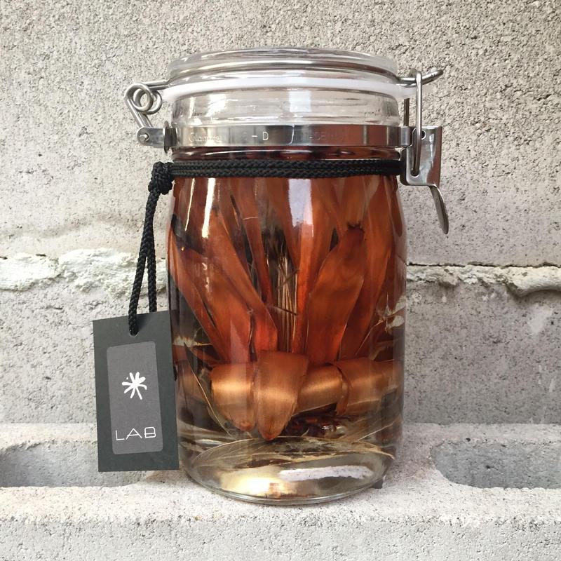 Lab bottle plants 1ℓ (protea limelight)