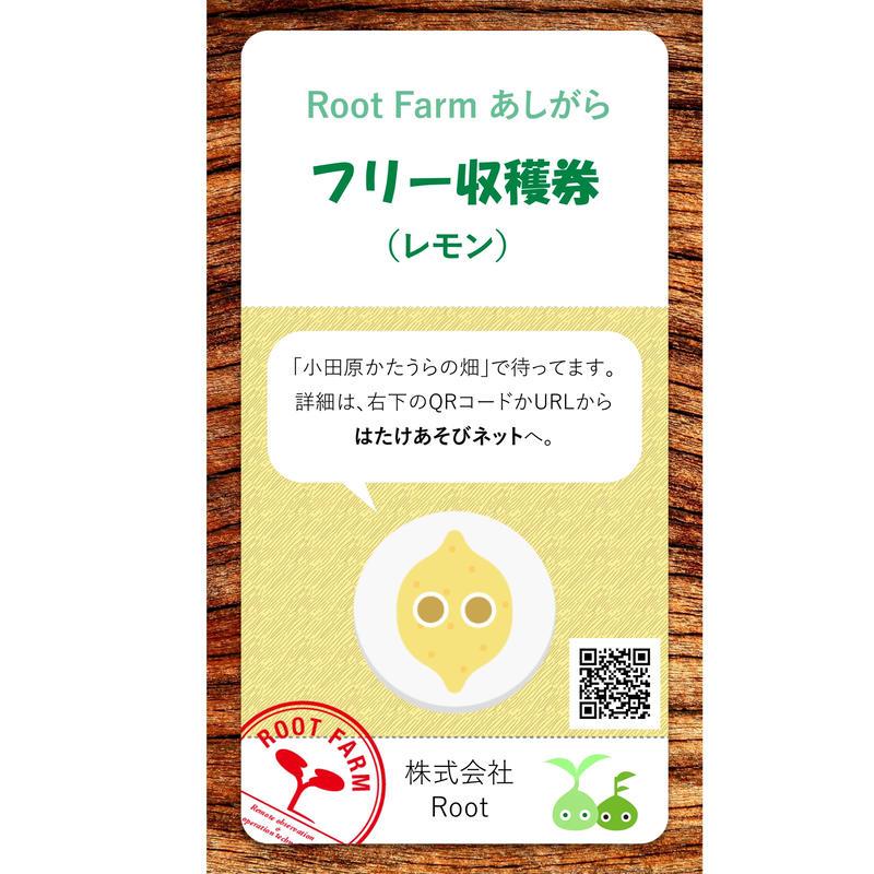 フリー収穫(レモン):2019年4~5月
