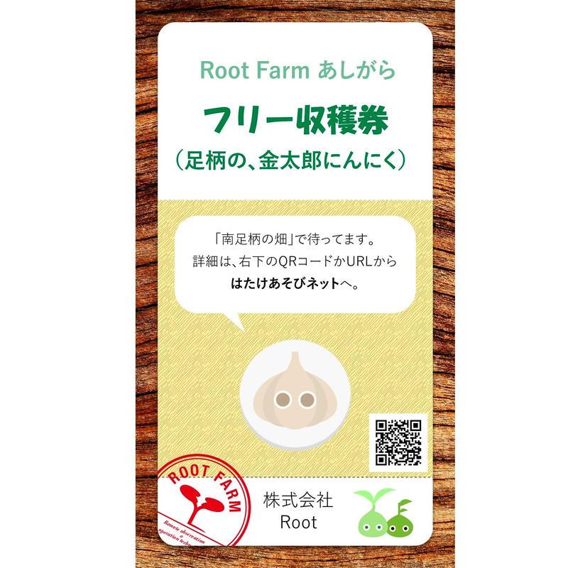 フリー収穫(足柄山の金太郎にんにく):2019年5-6月